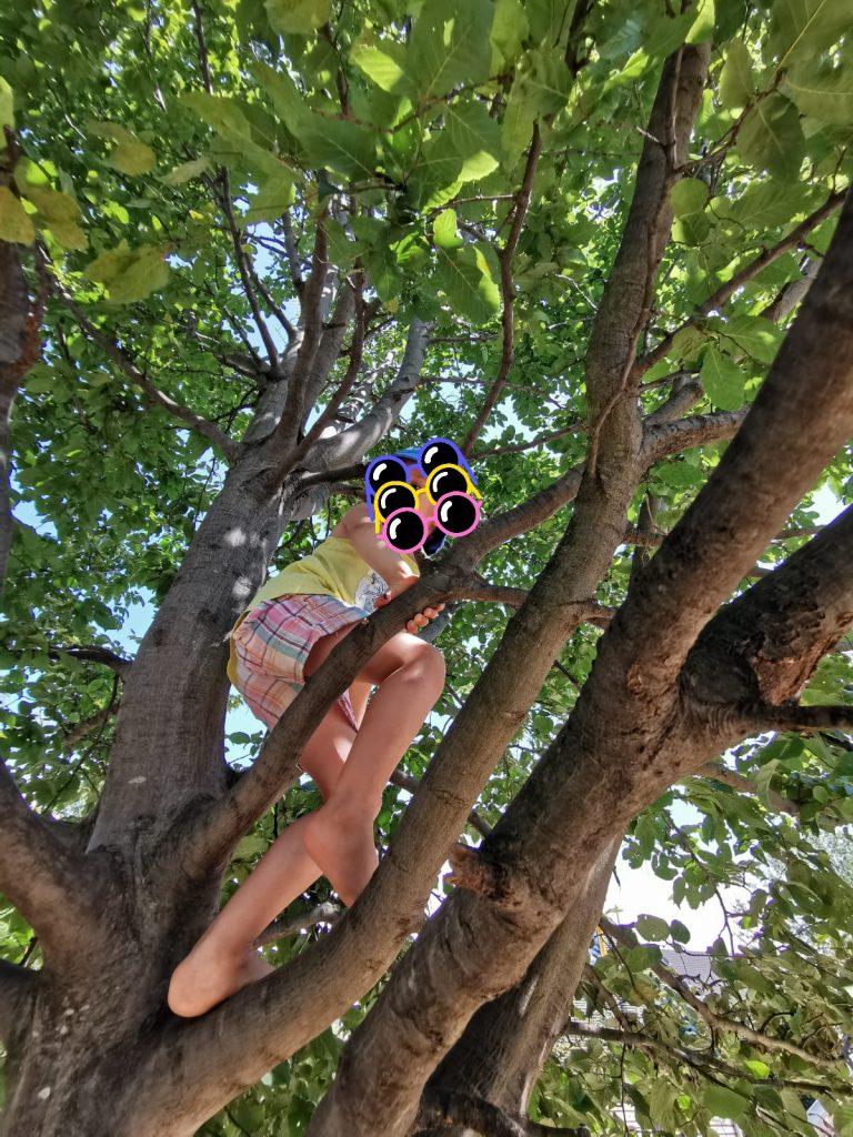 Das Julimädchen liebt es neuerdings, auf Bäume zu klettern.